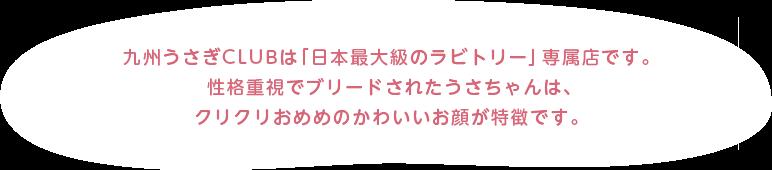九州うさぎCLUBは「日本最大級のラビトリー」専属店です。性格重視でブリードされたうさちゃんは、クリクリおめめのかわいいお顔が特徴です。