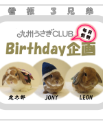 Birthday企画ブログ