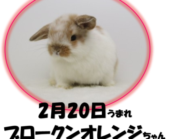 2.20BKNオレンジ-680x663