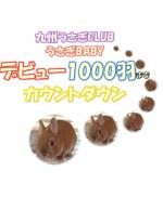 1000羽アイキャッチ