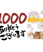 1000アイキャッチ