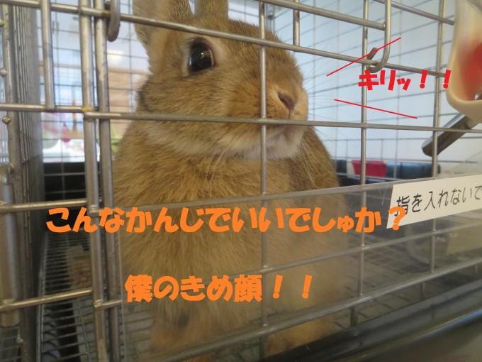 IMG_5605 - コピー