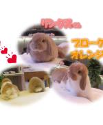 リンクス&BKNオレンジアイキャッチ
