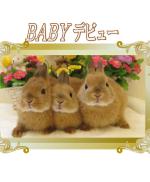 BABYデビュー