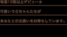 九州うさぎCLUBのかわいいうさちゃんはすべて「日本最大級のラビトリー」出身です。安心してお迎えくださいませ。かわいいうさちゃん達があなたとの出会いをおまちしていまぁす!