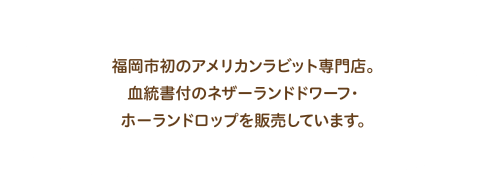 福岡市初のアメリカンラビット専門店。血統書付のネザーランドドワーフ・ホーランドロップを販売しています。